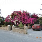 Two-story bougainvillea