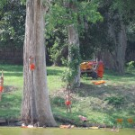 Young monks on the rope swing at Angkor Wat moat